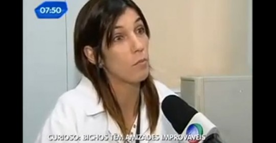 Especialista do Hospital Veterinario Sena Madureira explica amizades inusitadas entre espécies diferentes de animais- TV Record.